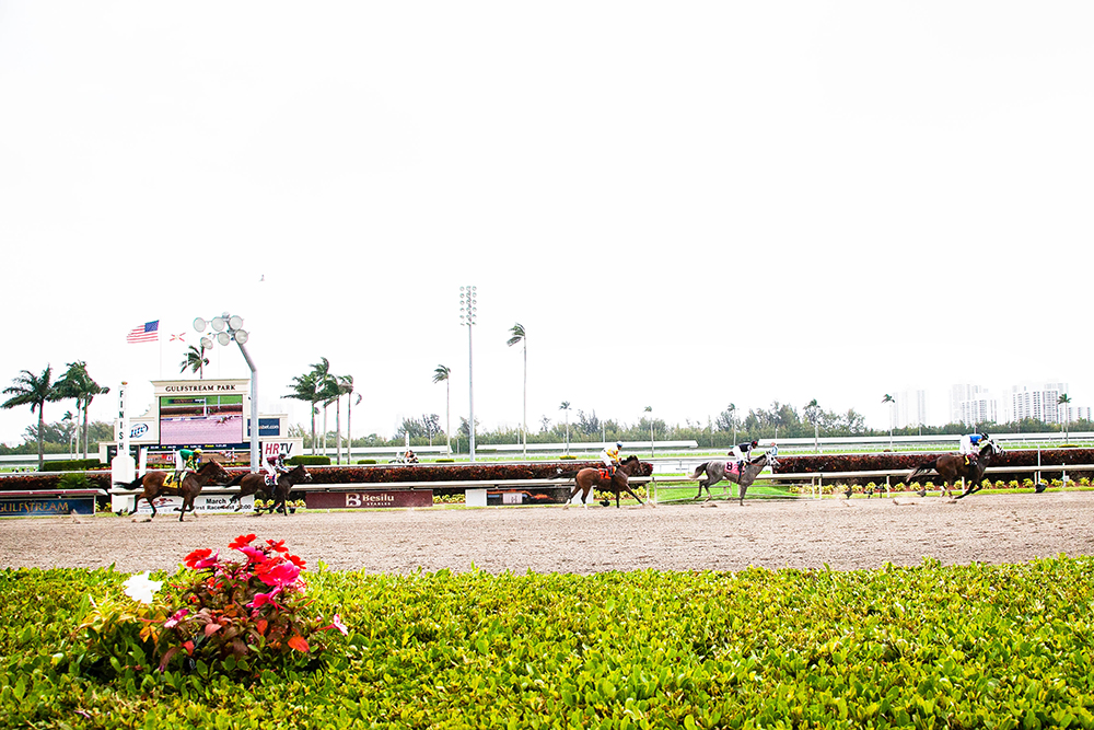 Florida Derby Race Gulfstream Park