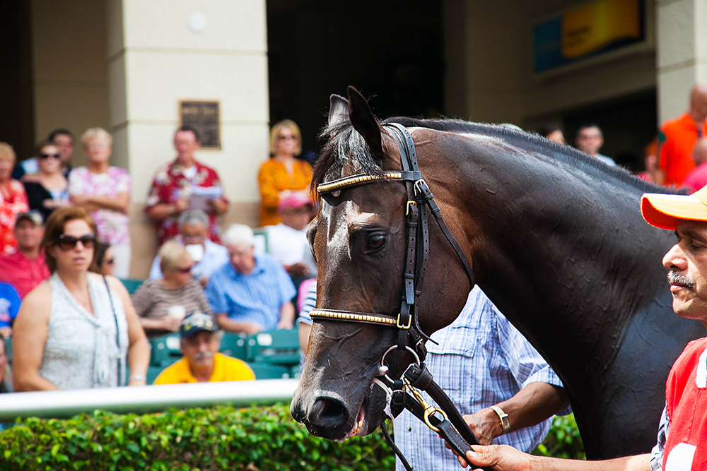 Miami Florida Derby Race Gulfstream Park Hallandale Beach