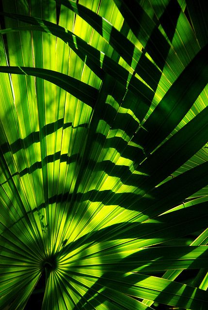 Green Leaves & Shades