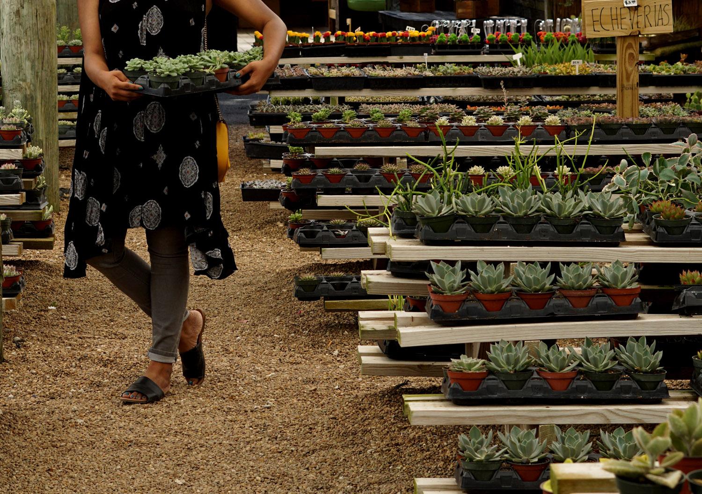 Whole Succulents Farm Homestead Miami