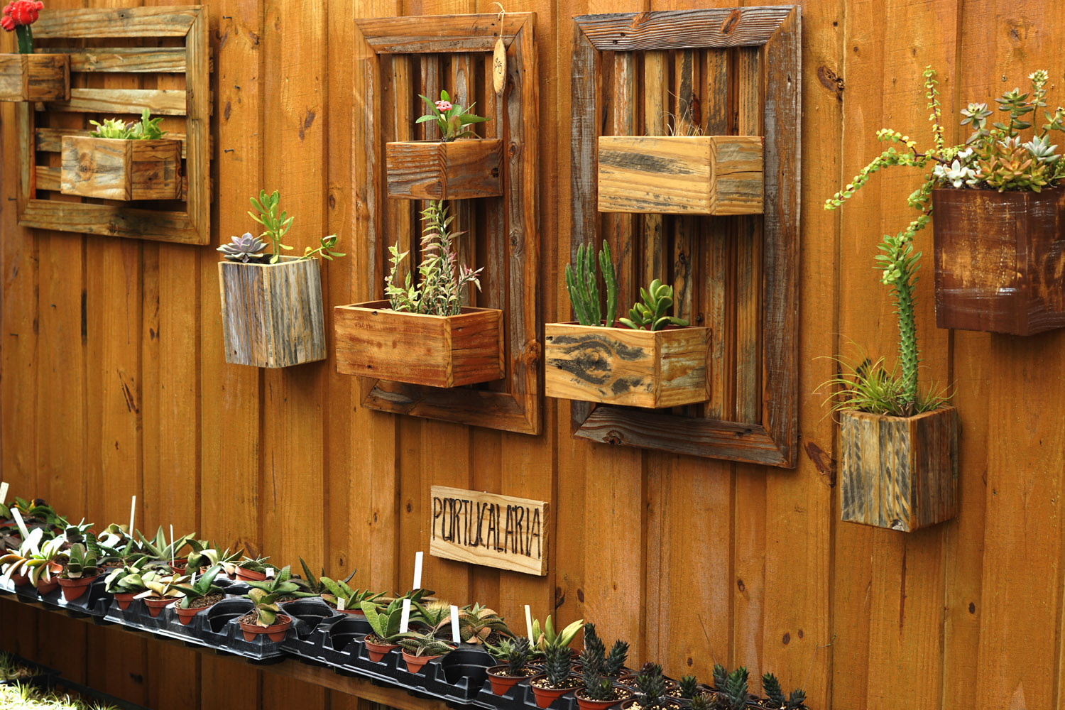 Succulents Wall Design Chic Boho Interior