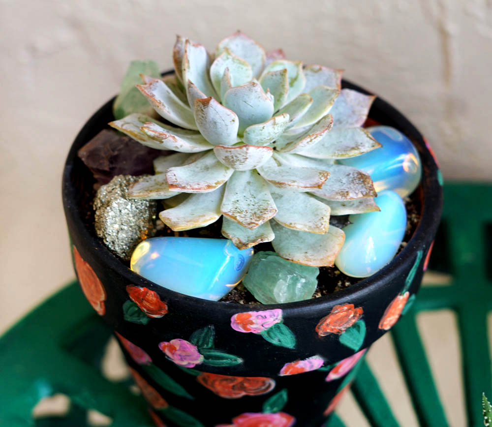 Pachyveria Succulents DIY Lifestyle Blogger