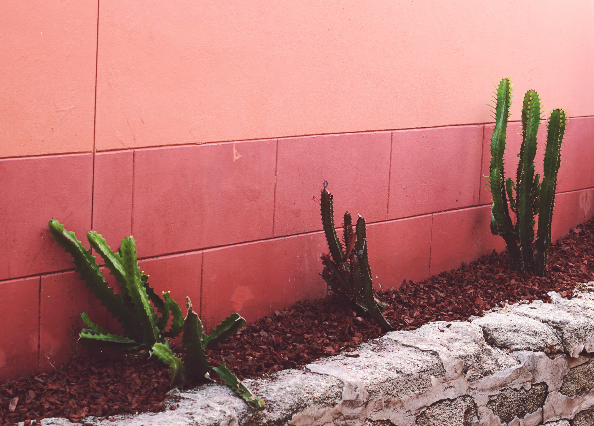 Pink Wall and Green Cactus