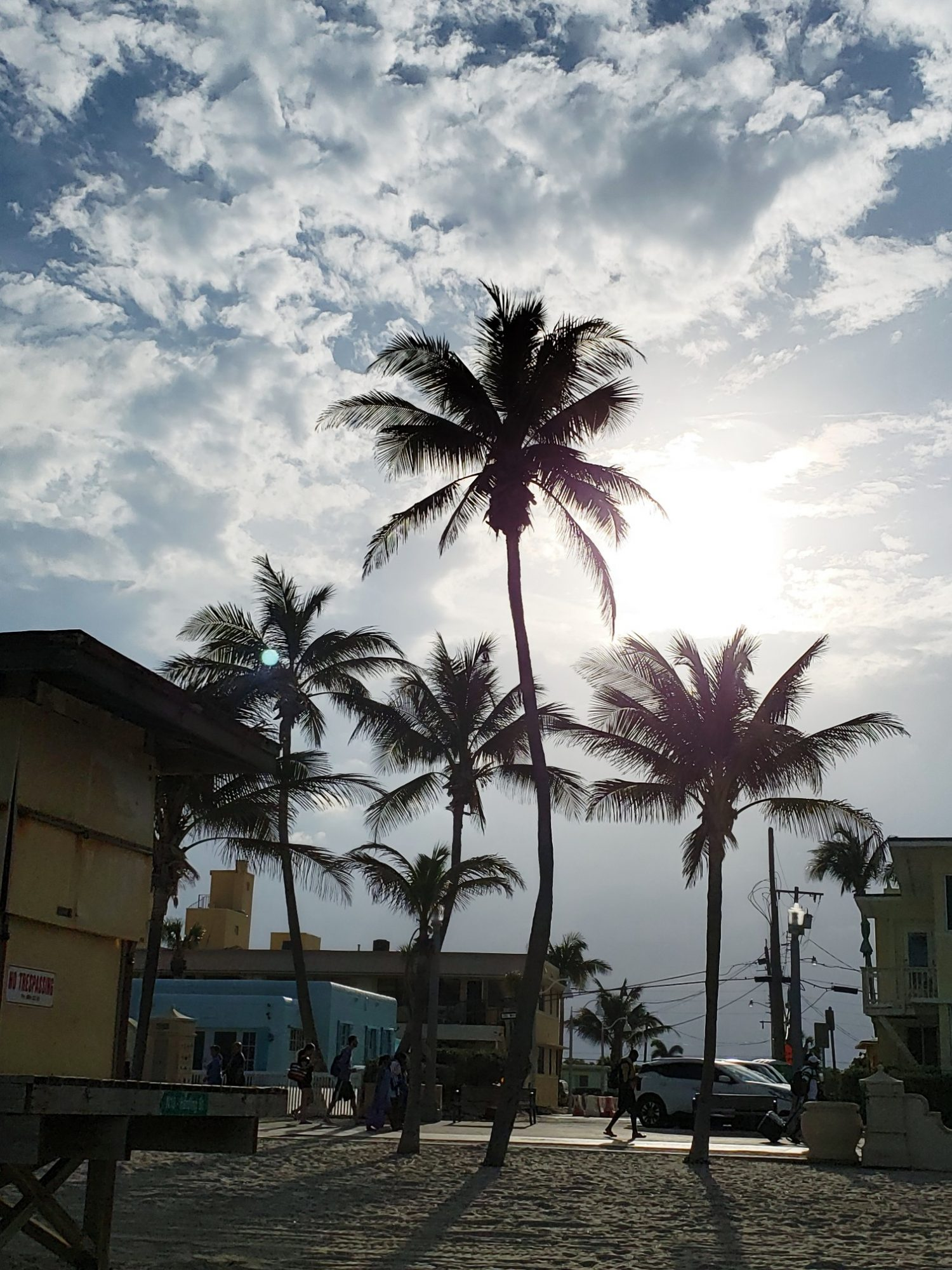 Hollywood Beach Florida Palm Trees Travel Blogger