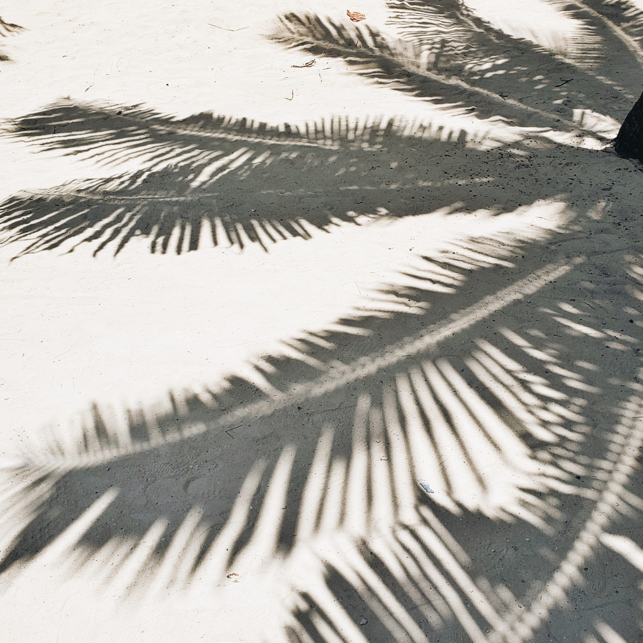 Palm Tree Leaves Shadows on sand