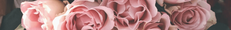 Pink Rose Essential Beauty Products